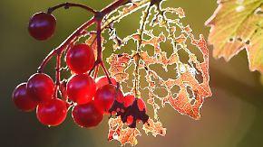 Goldener Herbst in Mitteldeutschland: Nacht bringt Nebel und Bodenfrost