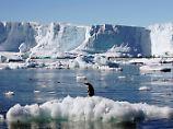 Rossmeer vor der Antarktis: Größtes Schutzgebiet der Erde beschlossen