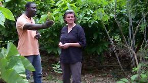 Kakaoanbau im Regenwald: Produzenten schummeln mit Nachhaltigkeitszertifikaten