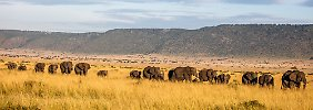 Projekt in Kenia gegen Wilderer: Wärmebildkameras sollen Elefanten schützen