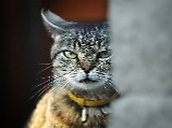 Katze zu teuer: Supermarkt-Filialleiter veruntreut 20.000 Euro