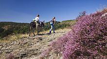 Auch heute noch beliebt: Mit einem Esel durch die französischen Cevennen reiten.