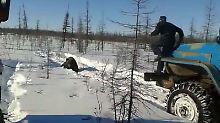 """""""Zerquetscht ihn"""" mit dem Auto: Russen quälen Braunbären zu Tode"""
