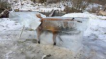 Abschreckendes Beispiel: Fuchs stirbt Eis-Tod