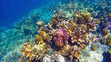 Unterwasserpark auf den Philippinen: SpongeBob blitzt am Korallenriff ab