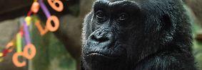 Nun ist sie im Alter vom 60 Jahren im Columbus Zoo und Aquarium im US-Bundesstaat Ohio gestorben.