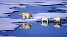 Weltweiter Temperaturanstieg: 2016 knackt alle Hitzerekorde