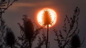 Zweigeteiltes Wetter in Deutschland: Petrus verwöhnt nur den Süden mit Sonne