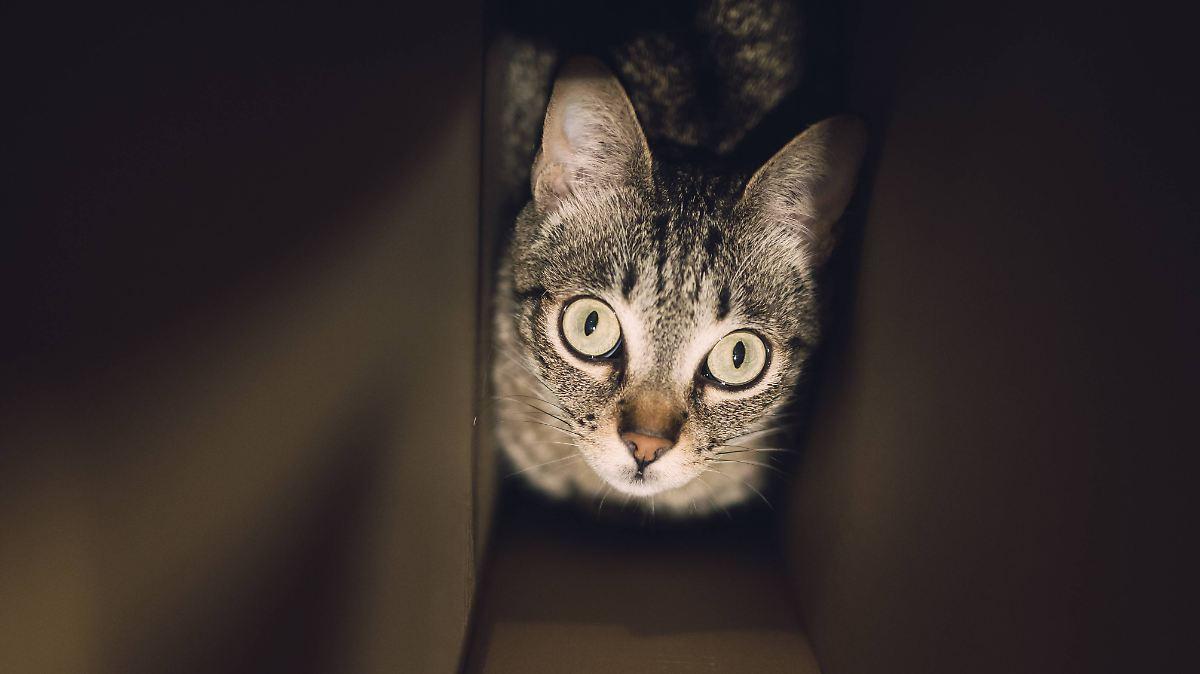 was seht ihr es ist tot schulbuch lehrt wie man katzen erstickt n. Black Bedroom Furniture Sets. Home Design Ideas