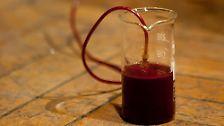 Synthesizer spielt acht Stunden: Künstler gewinnt Strom aus Blut