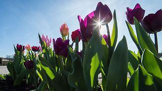 Gelungener Wochenstart: Thermometer knackt 20-Grad-Marke