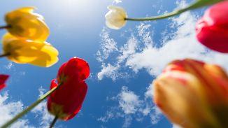 Bis zu 22 Grad am Oberrhein: Frühling gibt Vollgas