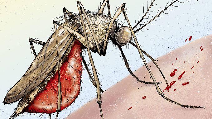 Drei der 28 in Deutschland lebenden Mückenfamilien rücken dem Menschen zu Leibe: Stech- und Kriebelmücken sowie Gnitzen.