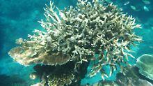"""""""Null Aussicht auf Erholung"""": Great Barrier Reef: Forscher sehen schwarz"""