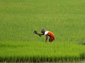 Ohne Monsun gäbe es in Indien keine Landwirtschaft.