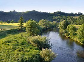 Schmale Pfade führen auf fast 200 Kilometern von Siegburg nach Mudersbach entlang der Sieg.