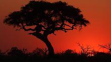 Wenn die Kalahari blüht: Botsuana lockt besonders zur Regenzeit