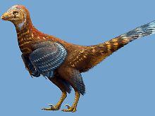 Fundsache, Nr. 1351: Früher Dinosaurier mit Federn in China