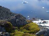 Nie dagewesenes Pflanzenwachstum: Weiße Antarktis ändert ihre Farbe