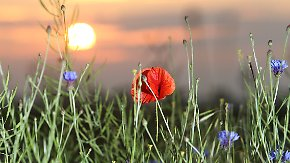 Tolle Aussichten für Christi Himmelfahrt: Traumhaftes Frühsommer-Wetter bekommt kleine Delle