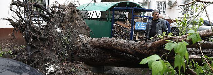 Heftiger Wirbelsturm in Moskau: Umstürzende Bäume töten elf Menschen