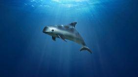 So wie diese Animation von Greenpeace zeigt, sieht der Wal aus, um den es geht.