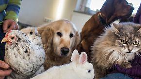 n-tv Ratgeber: Das sollten Haustierhalter wissen