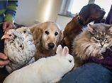 Frage & Antwort, Nr. 494: Schaden Haustiere der Umwelt?