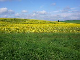 Unterwegs mit dem Rad zwischen Rutenberg und Lychen: weite Felder und ein hoher Himmel.
