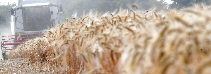 Preise steigen langsam: Bauern schöpfen wieder etwas Mut