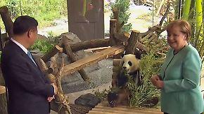Boten deutsch-chinesischer Freundschaft: Merkel und Xi weihen Panda-Haus im Berliner Zoo ein
