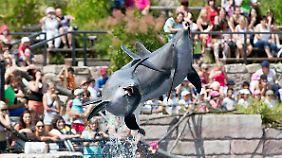 Zoos beschreiben die Delfin-Shows als notwendige Beschäftigung für die Tiere.