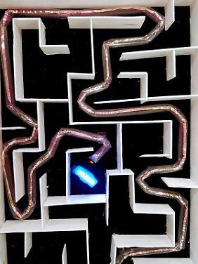 Der wachsende Roboter navigiert in einem Labyrinth.