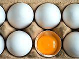 Fipronil-belastete Eier: Behörden wussten seit Anfang Juni vom Gift