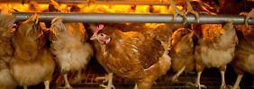 Manager von Reinigungsfirma: Zwei Festnahmen im Eier-Skandal