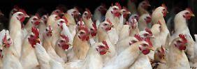 Belastete Eier: Der Stand im Fipronil-Skandal