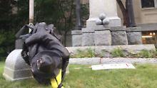 Protest-Aktion in North Carolina: Demonstranten stürzen Südstaaten-Denkmal