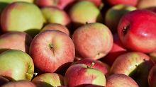 Später Frost und Hagel: Apfelbauern bangen um ihre Ernte