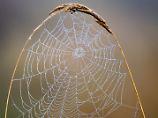 Steril und extrem strapazierbar: Spinnenseide könnte zum Multitalent werden