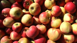 Unterdurchschnittliche Ernte: Preise für Obst werden wohl steigen