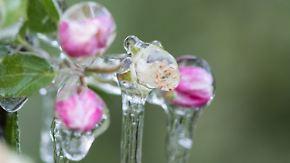Frost schadete Bäumen: Schlechteste Apfelernte seit 26 Jahren