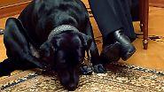 """Im """"diplomatischen Dienst"""": Politiker und ihre Hunde"""
