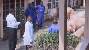 Eigener DJ für den Stall: Kuschelrock bringt ruandische Schweine zum Schmusen