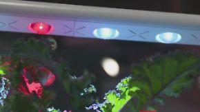 Musik auf dem Knochen, Salat unterm Bett: IFA wartet mit verrückten Gadgets auf