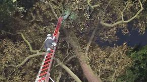 Rettungsaktion in Hamburg: Katze sitzt vier Tage auf Riesenbaum fest
