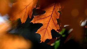 Goldener Herbst im Anmarsch: Nach Mittwoch geht es bergauf mit dem Wetter