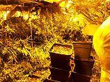 """Über 1000 Cannabispflanzen: Drogenring nutzt """"Horrorhaus"""" von Höxter"""