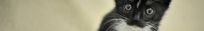 Der Tag: 17:49 Katzenkauf artet in Gewalt aus