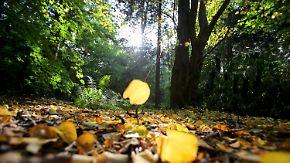 Mild bei Temperaturen bis 21 Grad: Sonne schenkt Westen strahlendes Herbstwochenende