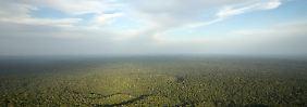 Flugzeugabsturz in Brasilien: Greenpeace trauert um junge Schwedin